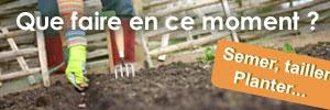 Calendrier des travaux de jardinage